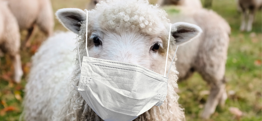 sheep with mask